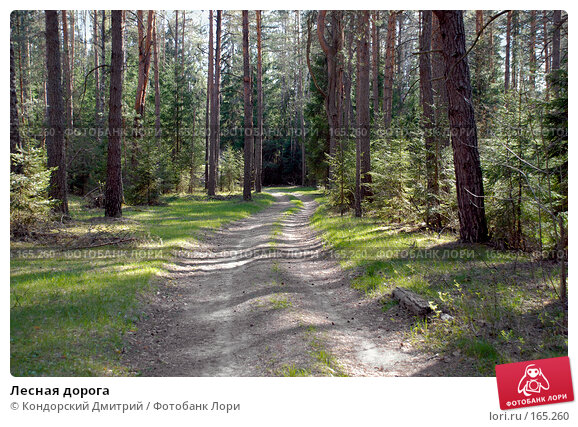Лесная дорога, фото № 165260, снято 6 мая 2007 г. (c) Кондорский Дмитрий / Фотобанк Лори