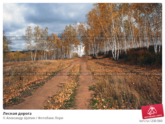 Лесная дорога, эксклюзивное фото № 230560, снято 26 сентября 2007 г. (c) Александр Щепин / Фотобанк Лори