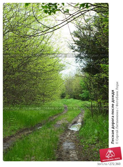 Лесная дорога после дождя, фото № 272360, снято 3 мая 2008 г. (c) Сергей Литвиненко / Фотобанк Лори