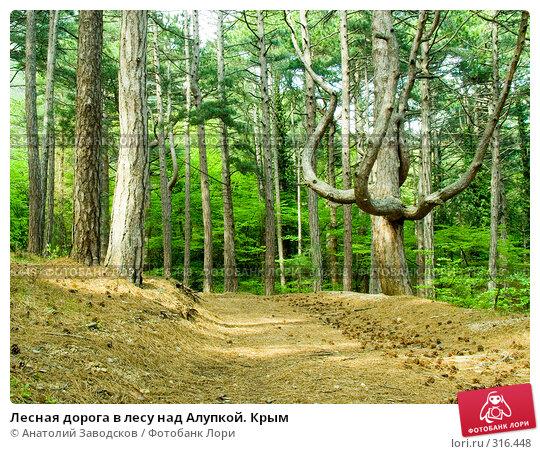 Лесная дорога в лесу над Алупкой. Крым, фото № 316448, снято 7 мая 2005 г. (c) Анатолий Заводсков / Фотобанк Лори