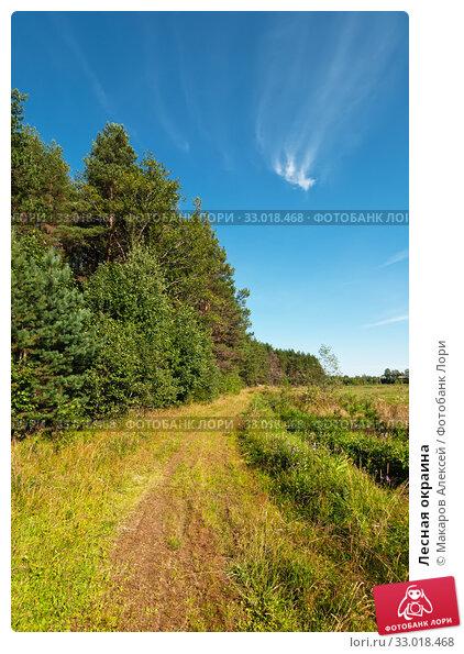 Купить «Лесная окраина», эксклюзивное фото № 33018468, снято 13 августа 2019 г. (c) Макаров Алексей / Фотобанк Лори