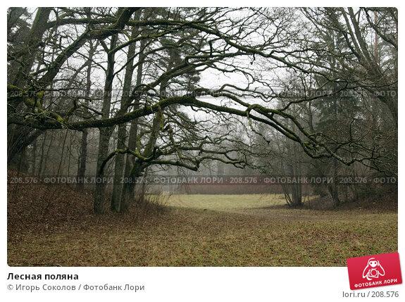 Лесная поляна, фото № 208576, снято 10 февраля 2008 г. (c) Игорь Соколов / Фотобанк Лори