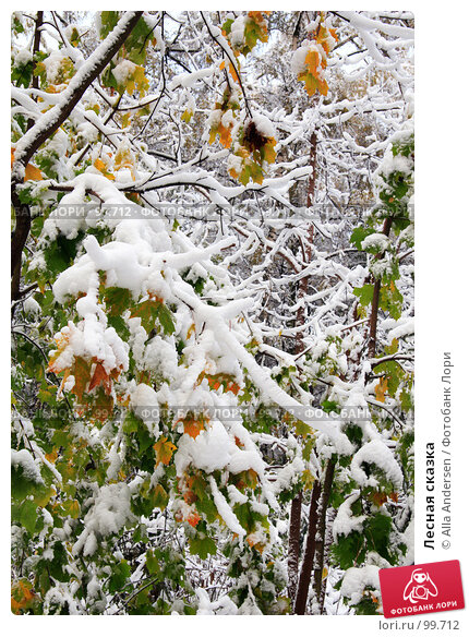Лесная сказка, фото № 99712, снято 16 октября 2007 г. (c) Alla Andersen / Фотобанк Лори