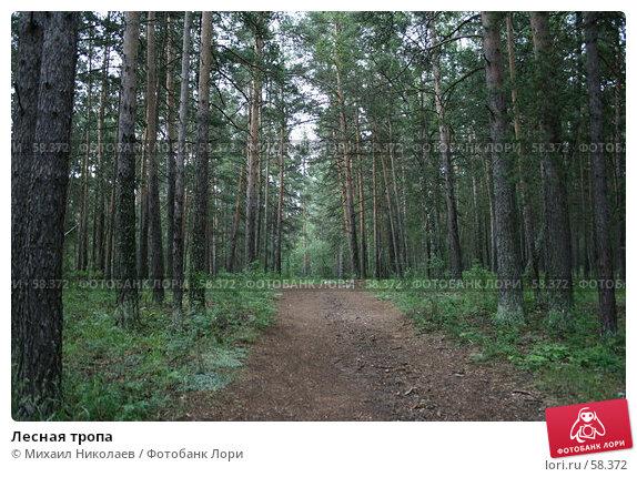 Лесная тропа, фото № 58372, снято 4 июля 2007 г. (c) Михаил Николаев / Фотобанк Лори