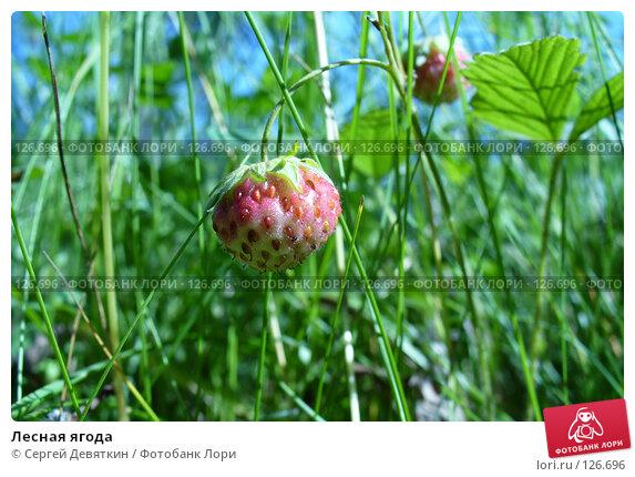 Лесная ягода, фото № 126696, снято 8 июля 2007 г. (c) Сергей Девяткин / Фотобанк Лори
