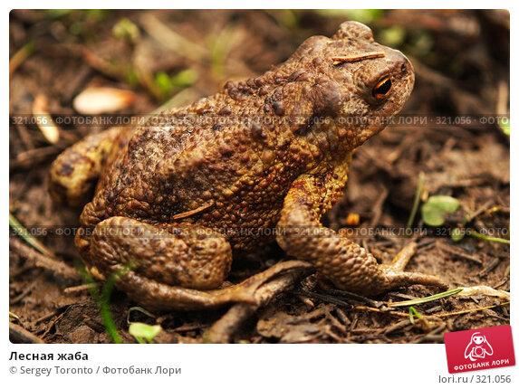 Купить «Лесная жаба», фото № 321056, снято 2 мая 2008 г. (c) Sergey Toronto / Фотобанк Лори