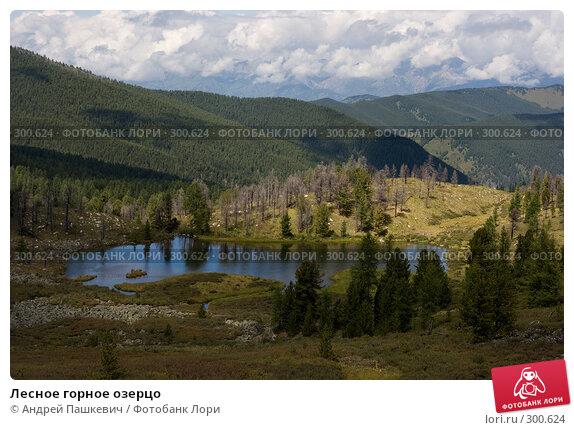 Лесное горное озерцо, фото № 300624, снято 21 января 2017 г. (c) Андрей Пашкевич / Фотобанк Лори