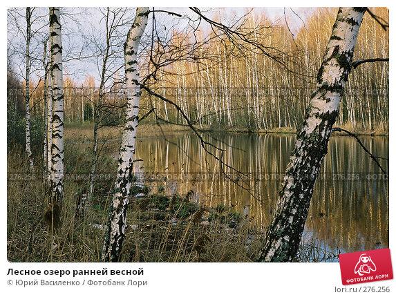 Купить «Лесное озеро ранней весной», фото № 276256, снято 24 ноября 2017 г. (c) Юрий Василенко / Фотобанк Лори