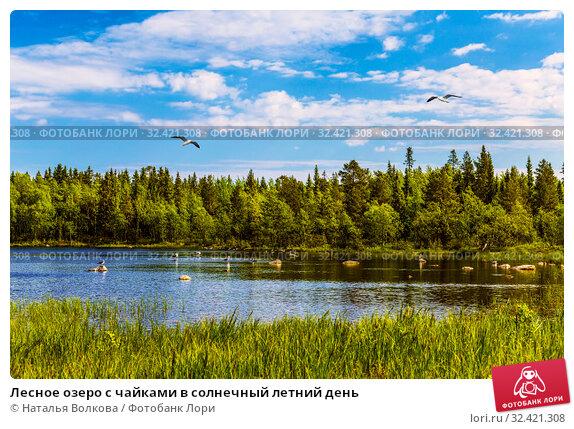 Купить «Лесное озеро с чайками в солнечный летний день», фото № 32421308, снято 18 июня 2018 г. (c) Наталья Волкова / Фотобанк Лори