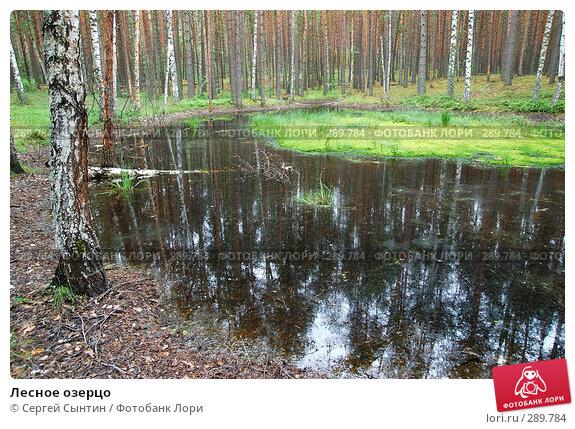 Лесное озерцо, фото № 289784, снято 30 июня 2007 г. (c) Сергей Сынтин / Фотобанк Лори