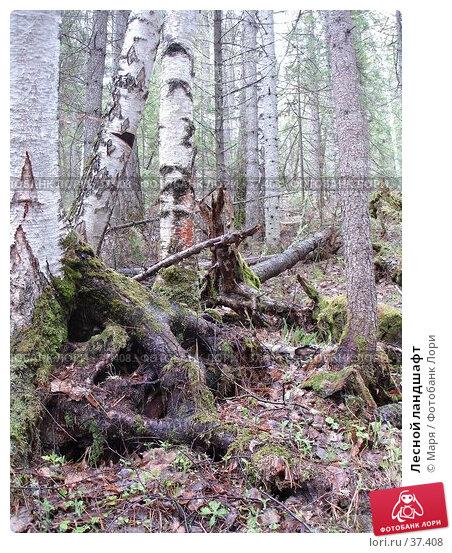Лесной ландшафт, фото № 37408, снято 28 мая 2006 г. (c) Маря / Фотобанк Лори