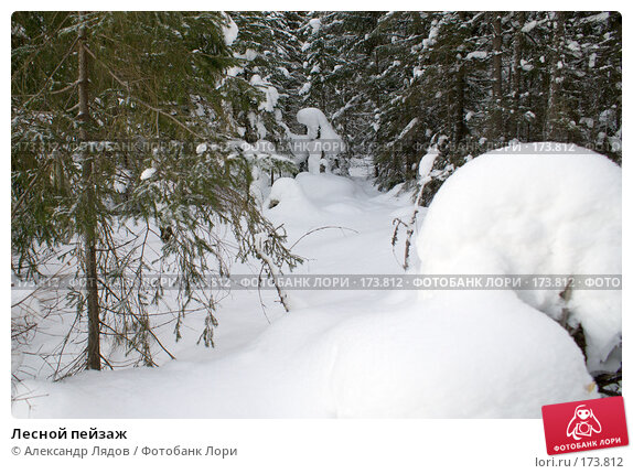 Лесной пейзаж, фото № 173812, снято 4 января 2008 г. (c) Александр Лядов / Фотобанк Лори