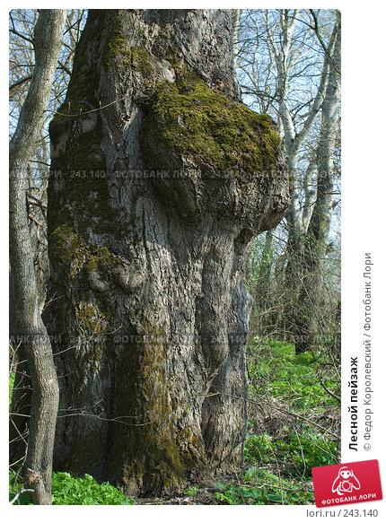 Лесной пейзаж, фото № 243140, снято 4 апреля 2008 г. (c) Федор Королевский / Фотобанк Лори