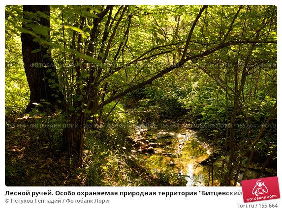 """Лесной ручей. Особо охраняемая природная территория """"Битцевский лес"""", фото № 155664, снято 4 сентября 2007 г. (c) Петухов Геннадий / Фотобанк Лори"""