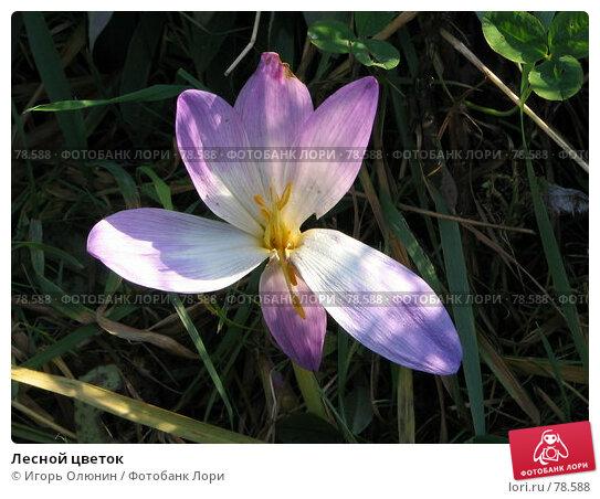 Лесной цветок, фото № 78588, снято 2 октября 2005 г. (c) Игорь Олюнин / Фотобанк Лори