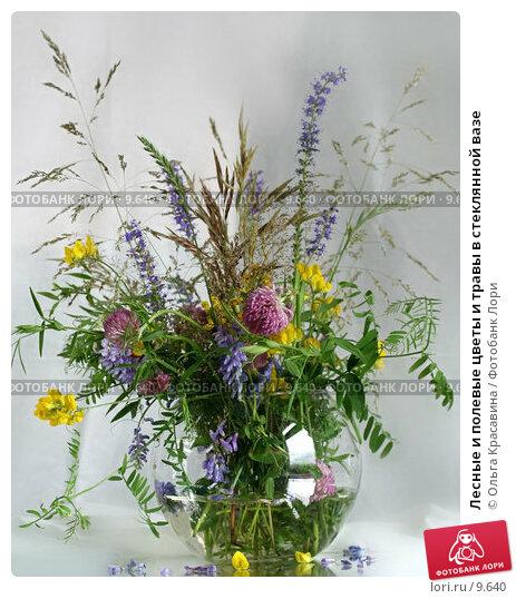 Лесные и полевые цветы и травы в стеклянной вазе, фото № 9640, снято 24 июля 2006 г. (c) Ольга Красавина / Фотобанк Лори