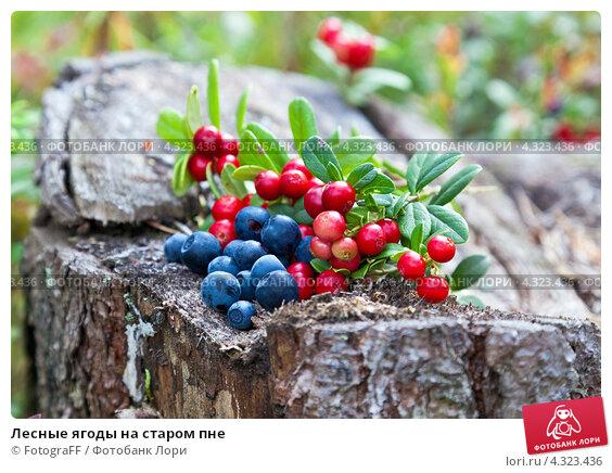 Купить «Лесные ягоды на старом пне», фото № 4323436, снято 20 мая 2020 г. (c) FotograFF / Фотобанк Лори