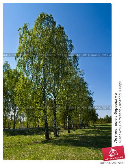 Купить «Летнее поле с березками», фото № 280544, снято 8 мая 2008 г. (c) Алексей Пантелеев / Фотобанк Лори
