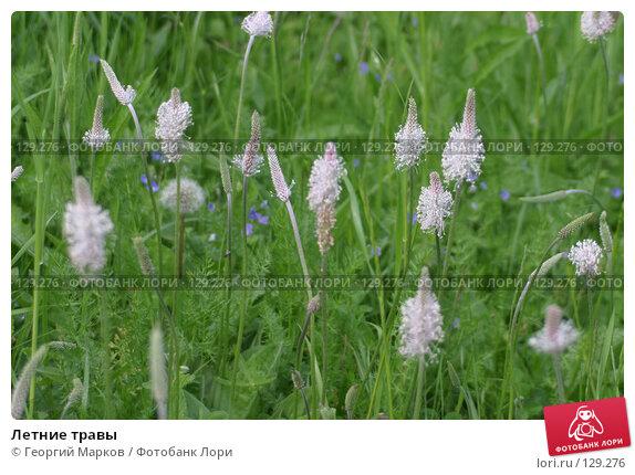Летние травы, фото № 129276, снято 11 июня 2005 г. (c) Георгий Марков / Фотобанк Лори