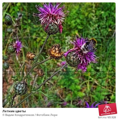 Купить «Летние цветы», фото № 65928, снято 23 ноября 2017 г. (c) Вадим Кондратенков / Фотобанк Лори