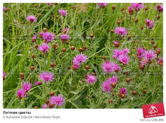 Летние цветы, фото № 230496, снято 15 июля 2007 г. (c) Катыкин Сергей / Фотобанк Лори