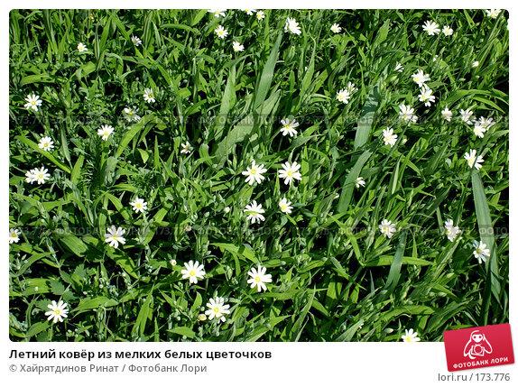 Купить «Летний ковёр из мелких белых цветочков», фото № 173776, снято 18 мая 2007 г. (c) Хайрятдинов Ринат / Фотобанк Лори