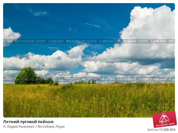 Купить «Летний луговой пейзаж», фото № 5008064, снято 15 августа 2013 г. (c) Лидия Рыженко / Фотобанк Лори