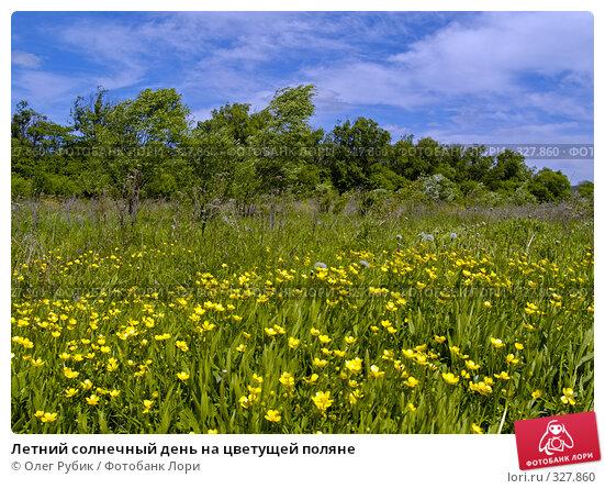 Летний солнечный день на цветущей поляне, фото № 327860, снято 10 июня 2008 г. (c) Олег Рубик / Фотобанк Лори