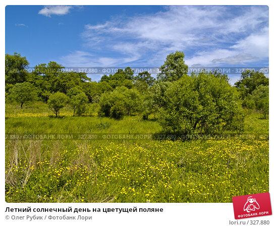 Летний солнечный день на цветущей поляне, фото № 327880, снято 10 июня 2008 г. (c) Олег Рубик / Фотобанк Лори