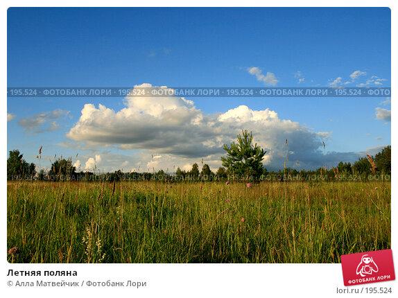 Летняя поляна, фото № 195524, снято 30 июня 2007 г. (c) Алла Матвейчик / Фотобанк Лори