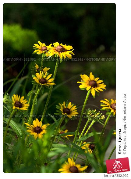 Купить «Лето. Цветы.», фото № 332992, снято 1 июля 2007 г. (c) Горшков Игорь / Фотобанк Лори