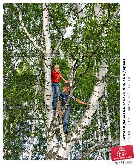 Летом в деревне. Мальчишки на дереве, фото № 311964, снято 21 июля 2007 г. (c) Светлана Силецкая / Фотобанк Лори
