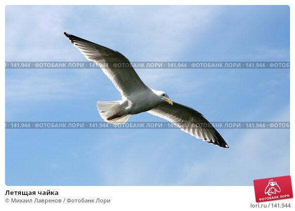 Летящая чайка, фото № 141944, снято 4 июня 2006 г. (c) Михаил Лавренов / Фотобанк Лори