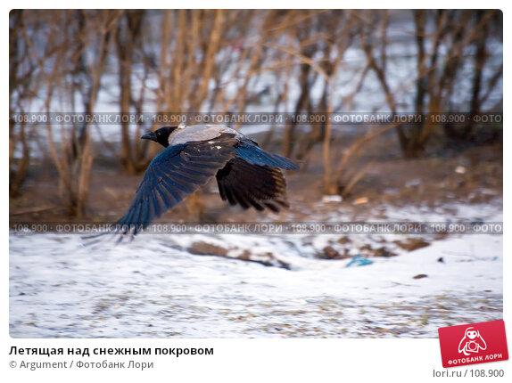 Летящая над снежным покровом, фото № 108900, снято 23 января 2007 г. (c) Argument / Фотобанк Лори