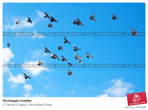 Летящие голуби, фото № 119628, снято 26 декабря 2006 г. (c) Сергей Старуш / Фотобанк Лори
