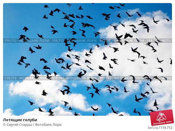 Летящие голуби, фото № 119712, снято 22 июля 2017 г. (c) Сергей Старуш / Фотобанк Лори