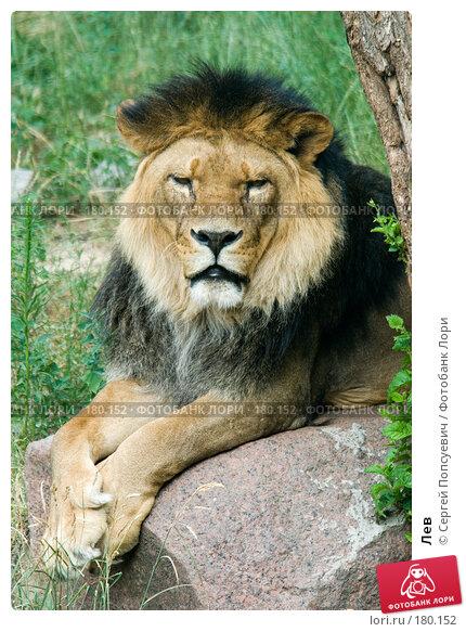 Лев, фото № 180152, снято 1 июля 2007 г. (c) Сергей Попсуевич / Фотобанк Лори