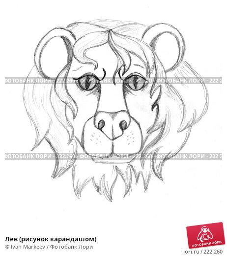 Лев (рисунок карандашом), иллюстрация № 222260 (c) Василий Каргандюм / Фотобанк Лори