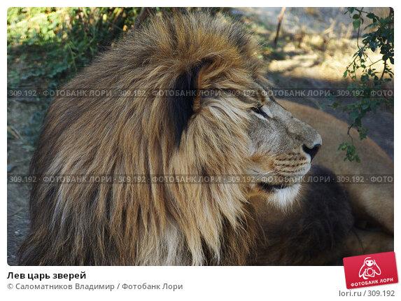 Лев царь зверей, фото № 309192, снято 19 июля 2007 г. (c) Саломатников Владимир / Фотобанк Лори