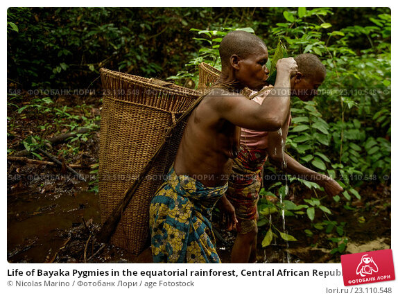 Купить «Life of Bayaka Pygmies in the equatorial rainforest, Central African Republic, Africa», фото № 23110548, снято 9 октября 2015 г. (c) age Fotostock / Фотобанк Лори