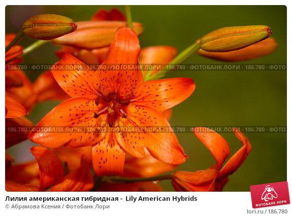 Купить «Лилия американская гибридная -  Lily American Hybrids», фото № 186780, снято 6 июля 2007 г. (c) Абрамова Ксения / Фотобанк Лори