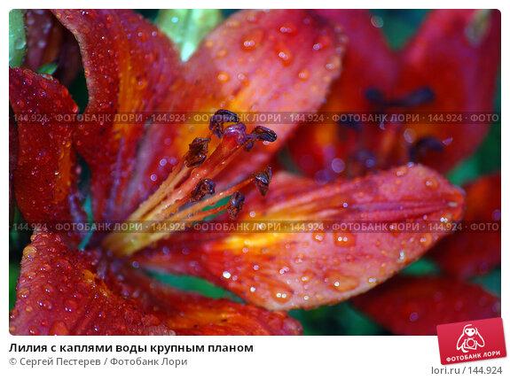 Лилия с каплями воды крупным планом, фото № 144924, снято 10 июня 2007 г. (c) Сергей Пестерев / Фотобанк Лори