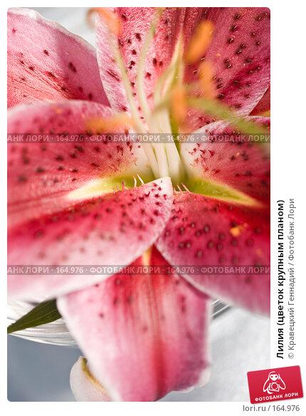 Лилия (цветок крупным планом), фото № 164976, снято 3 августа 2005 г. (c) Кравецкий Геннадий / Фотобанк Лори