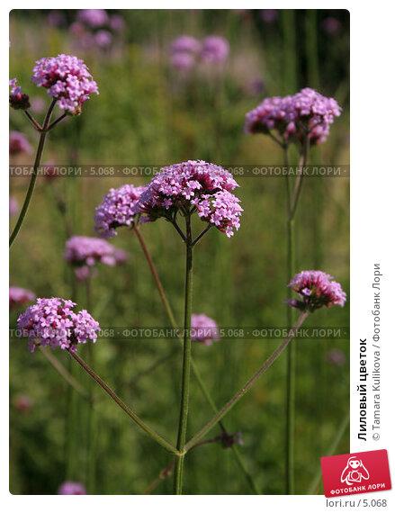 Купить «Лиловый цветок», фото № 5068, снято 1 июля 2006 г. (c) Tamara Kulikova / Фотобанк Лори