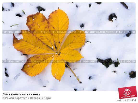 Купить «Лист каштана на снегу», фото № 111916, снято 4 ноября 2007 г. (c) Роман Коротаев / Фотобанк Лори