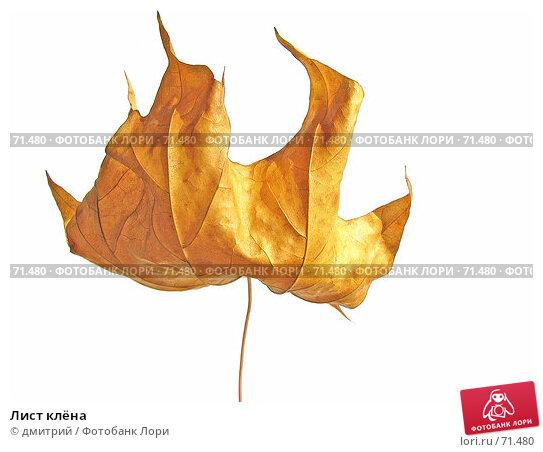 Купить «Лист клёна», фото № 71480, снято 6 октября 2004 г. (c) дмитрий / Фотобанк Лори