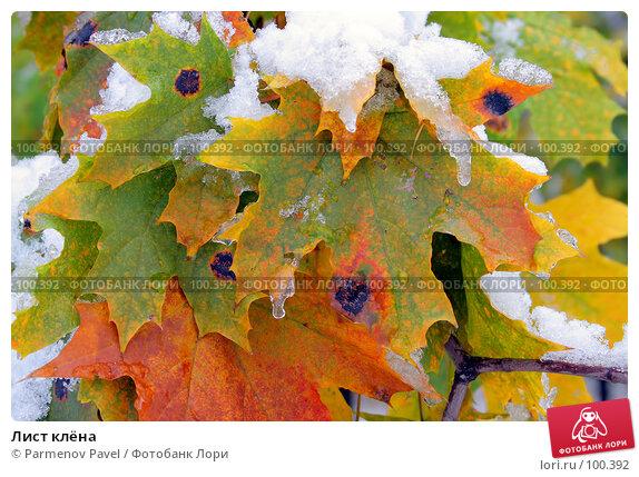 Лист клёна, фото № 100392, снято 16 октября 2007 г. (c) Parmenov Pavel / Фотобанк Лори