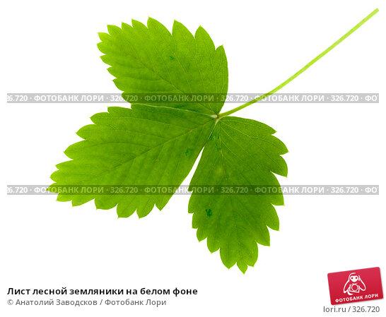 Лист лесной земляники на белом фоне, фото № 326720, снято 8 июля 2007 г. (c) Анатолий Заводсков / Фотобанк Лори