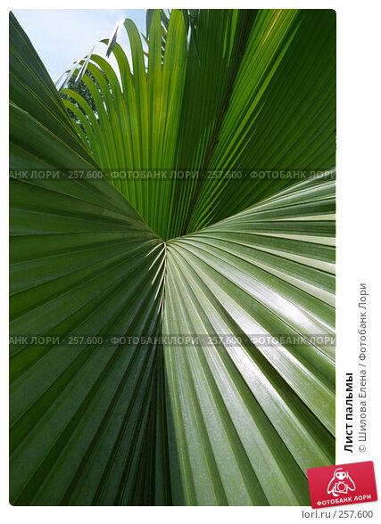 Лист пальмы, фото № 257600, снято 29 мая 2017 г. (c) Шилова Елена / Фотобанк Лори