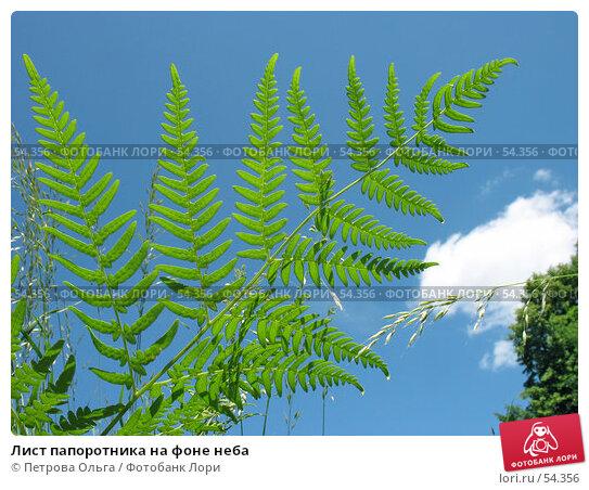 Купить «Лист папоротника на фоне неба», фото № 54356, снято 7 июня 2007 г. (c) Петрова Ольга / Фотобанк Лори